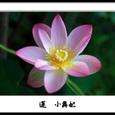 蓮小舞妃3