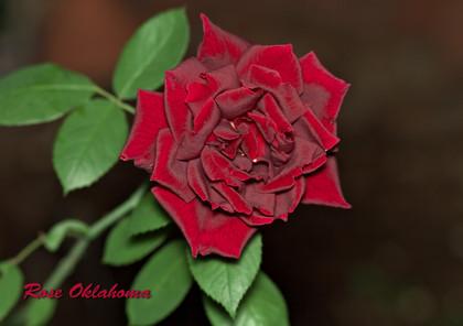 Oklahoma131025_1805_img_6156