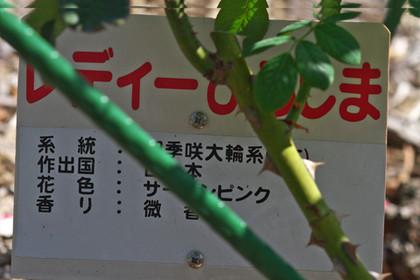 Ladyhiroshiman131014_1049_img_5700