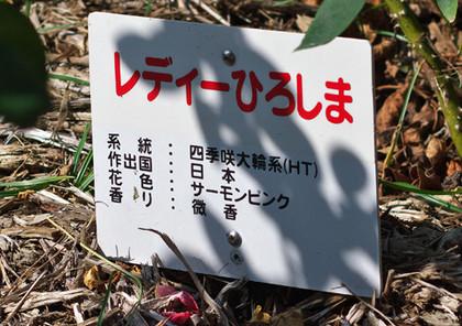 Lhiroshima131014_1050_img_5705