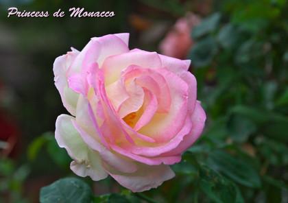 Pmonacco131103_122055_100_70_56_200