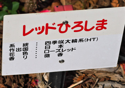 Rhiroshiman131014_105839_100_85_56_