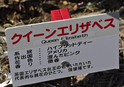 Queenelizabethn