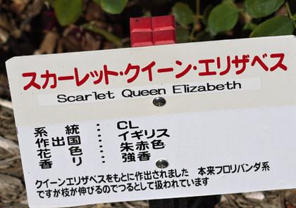 Scarletqueenelizabethn