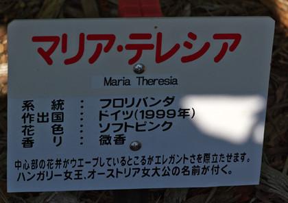 Mariatheresian