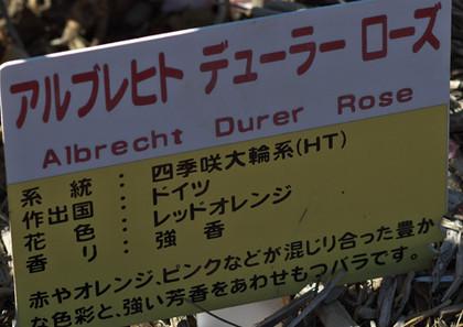 Durern